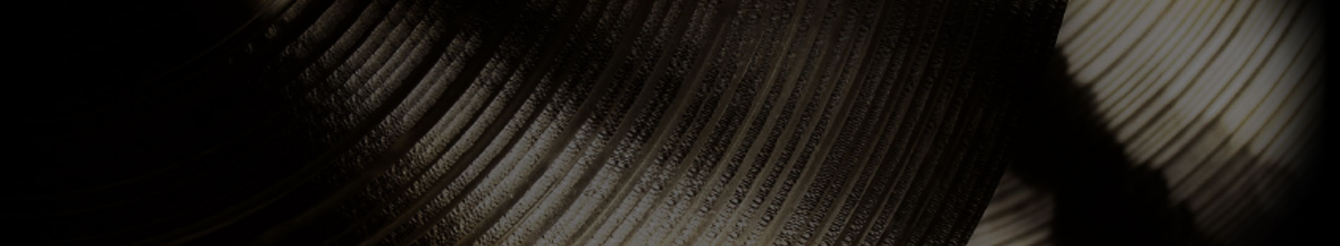 Image of Cymbal Up Close